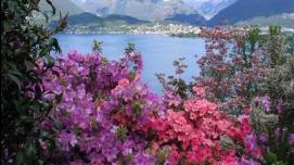 1446730844.1709.Frühling Ascona.CROPPED.large