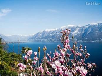 fruehling-im-tessin-lago-maggiore-ronco-ascona-7208631094